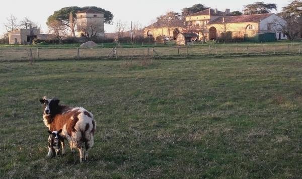 Nouvel agneau vue d'ensemble mars19