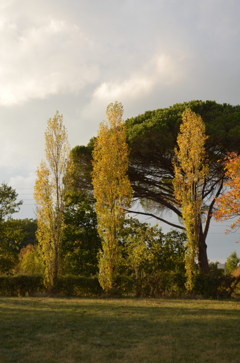 arbres du grand portail
